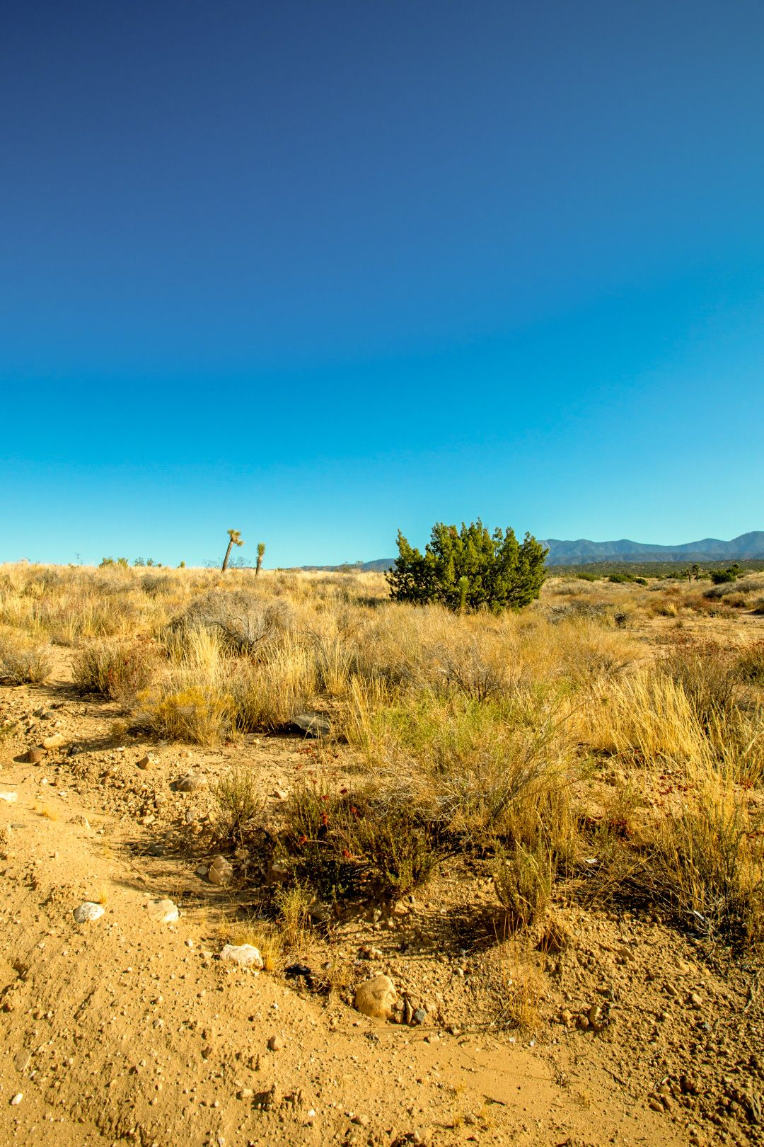 Llano California 2 13 Acres Residential Land With Road And Electric Elegment Land In 2020 Llano Residential Land Acre