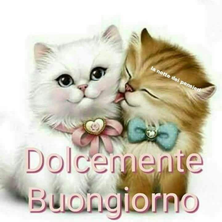 Pin di cinzia borromeo su buongiorno good morning i for Buongiorno con gattini