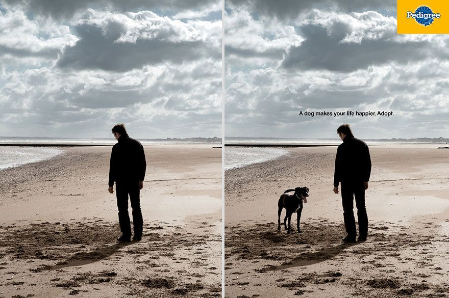 Image Result For Pedigree Print Ad Print Ads Best Ads Bbdo