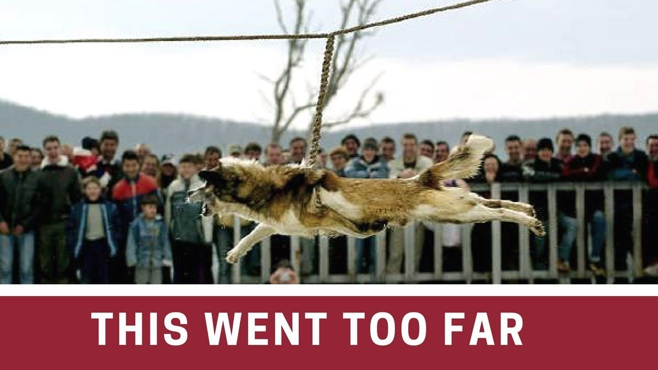 How They Dealt With These Dogs Will Make You All Lose Hope For