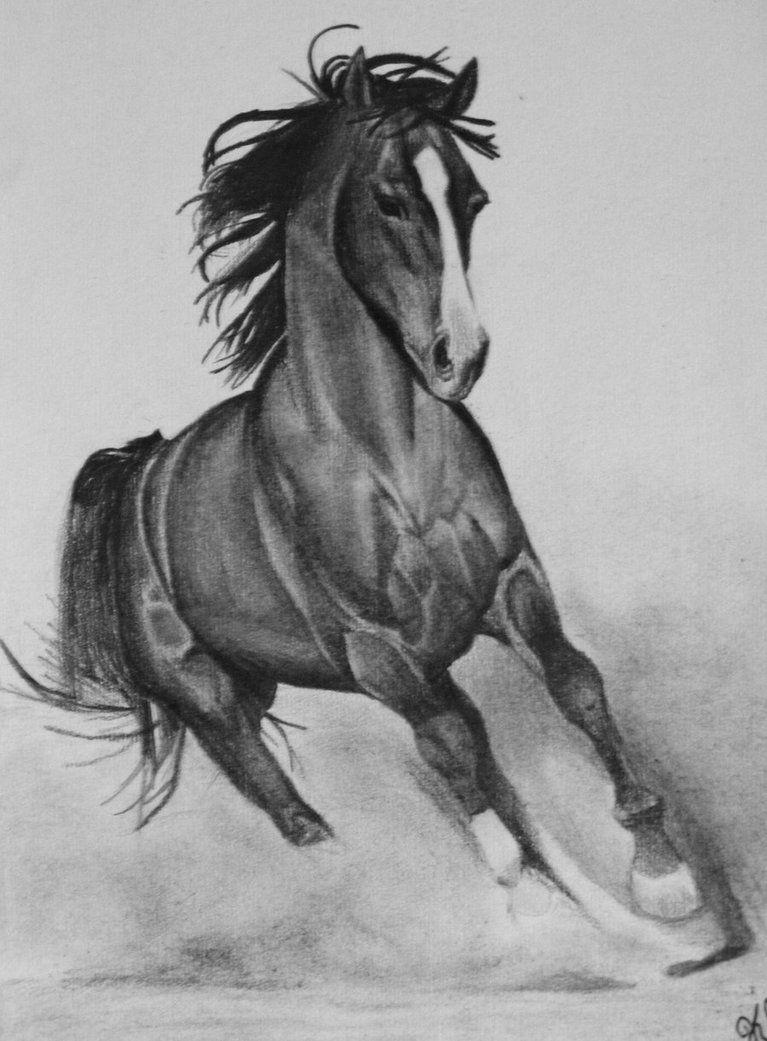Running Horse Horse Pencil Drawing Horse Sketch Horse Drawings