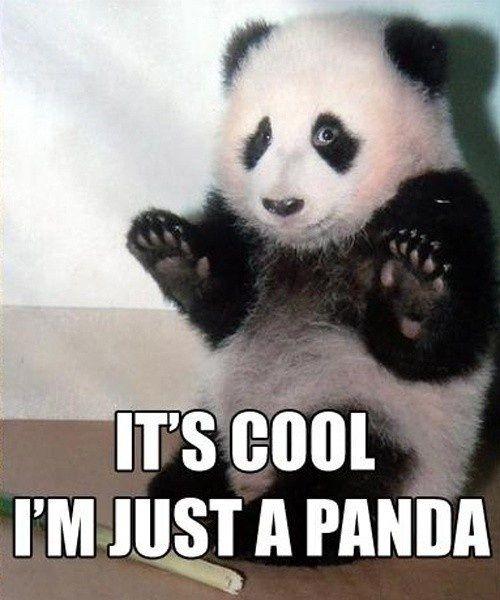 Just A Panda Fotos De Animais Engracados Panda Fofo Animais