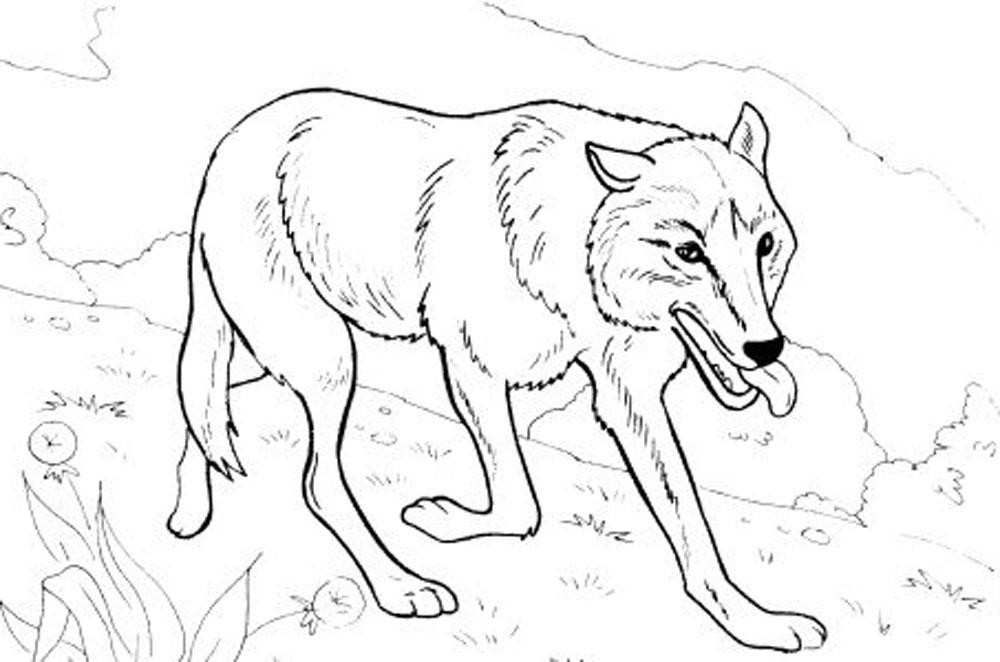 13+ Cute baby wolf coloring pages info