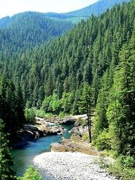 Clackamas River in Oregon-one of the most beautiful places I've been.