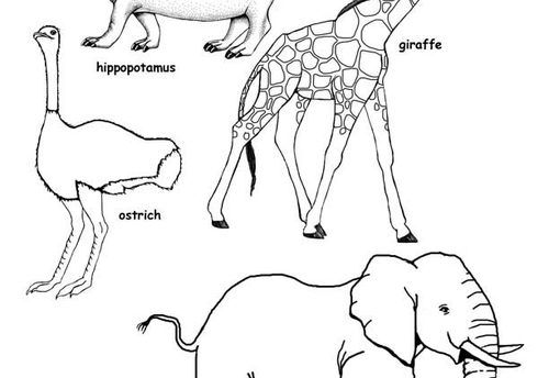 Grassland Animals Coloring Pages 63603 Dfiles For Kid