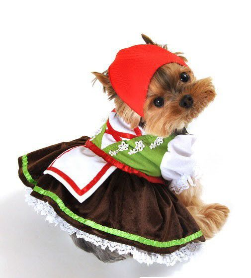 Pet costumes  sc 1 st  Pinterest & Two piece Alpine girl costume includes lime green lederhosen pants ...