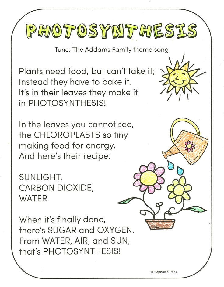 Photosynthesis for Kids Photosynthesis activities