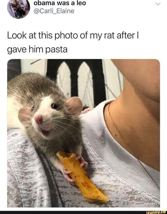 Wholesome Animal Memes To Start The Week Off Right