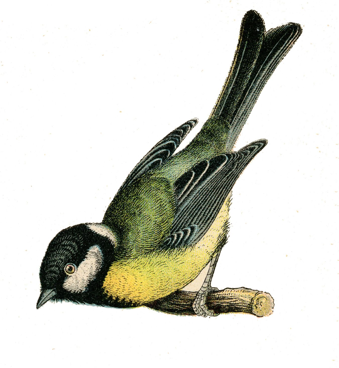 bird+vintage+graphic--graphicsfairy009bsm.jpg 1.350×1.465 piksel