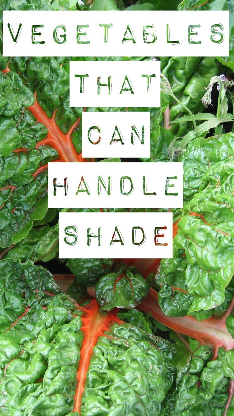 Shade Vegetables Try These 10 Options Backyard 400 x 300