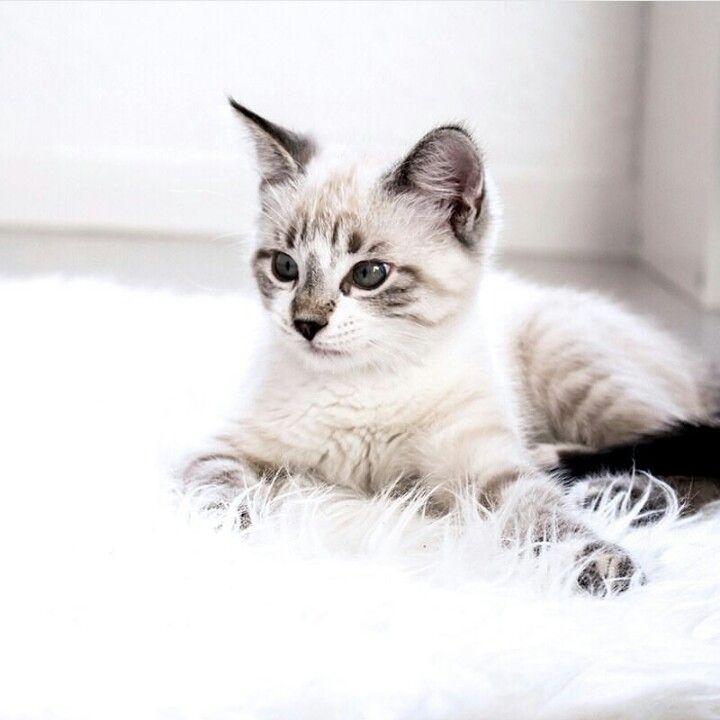 Pin By Helmiada On Cats Kissanpennut Kissa Lemmikit