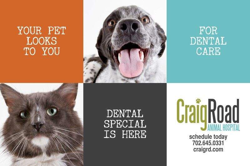 Dental special is here give your pet a reason to smile