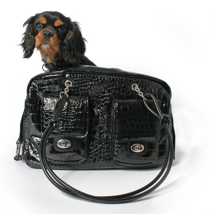 #dog look sexy and swaggy even when you carting around le pooch!