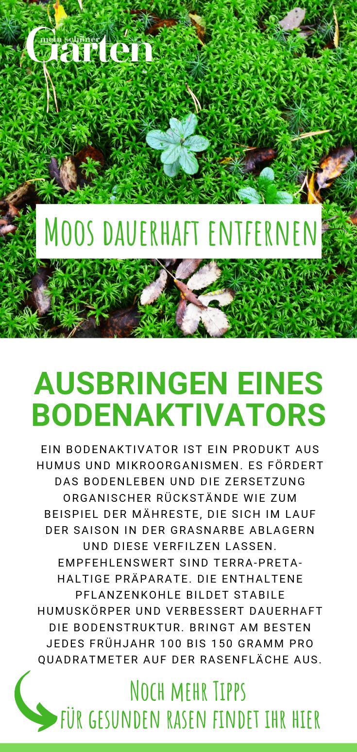 Moos Dauerhaft Entfernen So Wird Ihr Rasen Wieder Schon Moos Im Rasen Rasen Moos