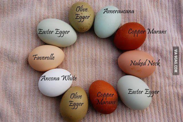 Image Result For Egg Color Chart Ens
