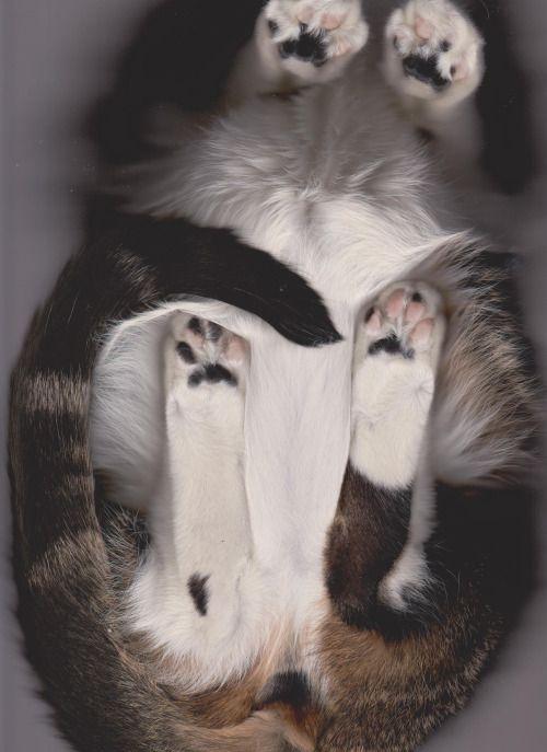 #Cat #Scan