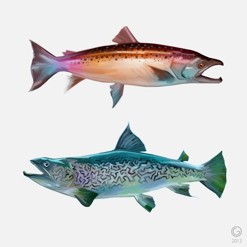 Salmonidae