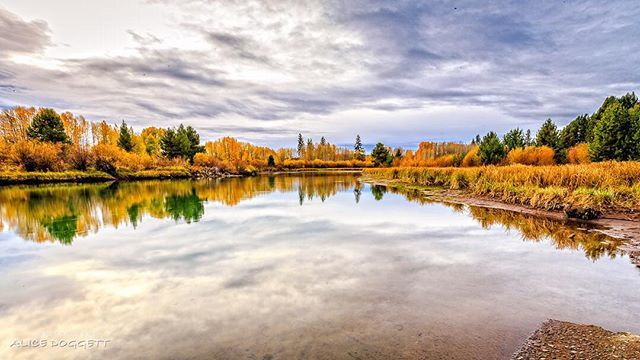 Fall colors on the Deschutes River in Central Oregon. ----------------------- @alicedoggett