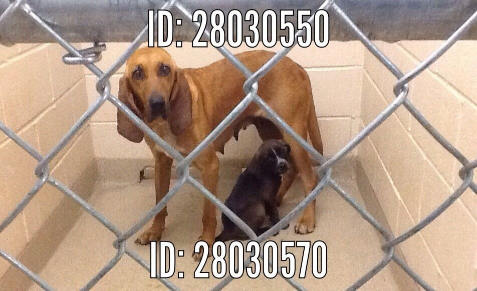 17+ Chesterfield county animal control ideas