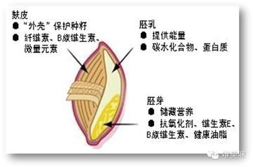 如果把包括這三個部分的整顆麥粒碾碎磨細 得到的就是全麥麵粉 從前小麥中的麩皮並不被人重視 因此常被當作飼料使用 而現在經過多項研究 證明了小麥中的麩皮含有營養價值極高的纖維素 所以現在全麥麵粉又出現在了人們的餐桌上 Food Vegetables Corn