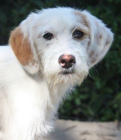 Reservierte Hunde Tierhilfe Korfu E V Tierhilfe Tiere Hunde