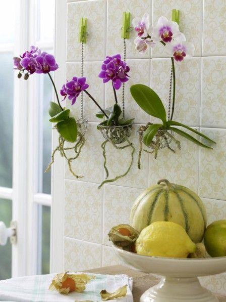 orchideen in drahtkörbchen