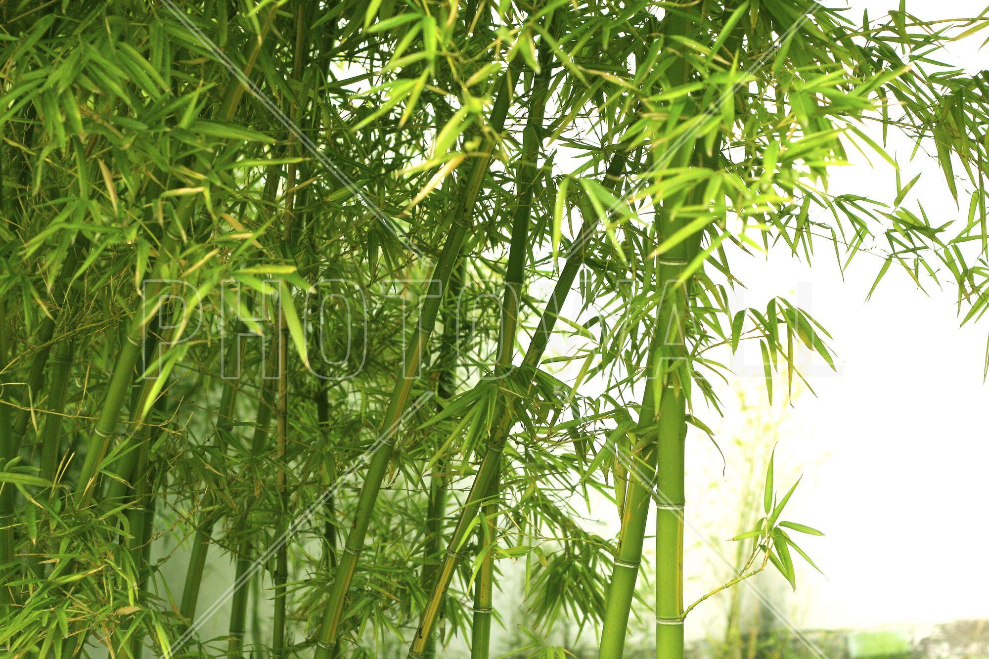 Beautiful Bamboo Fototapeten Tapeten Photowall Bambus
