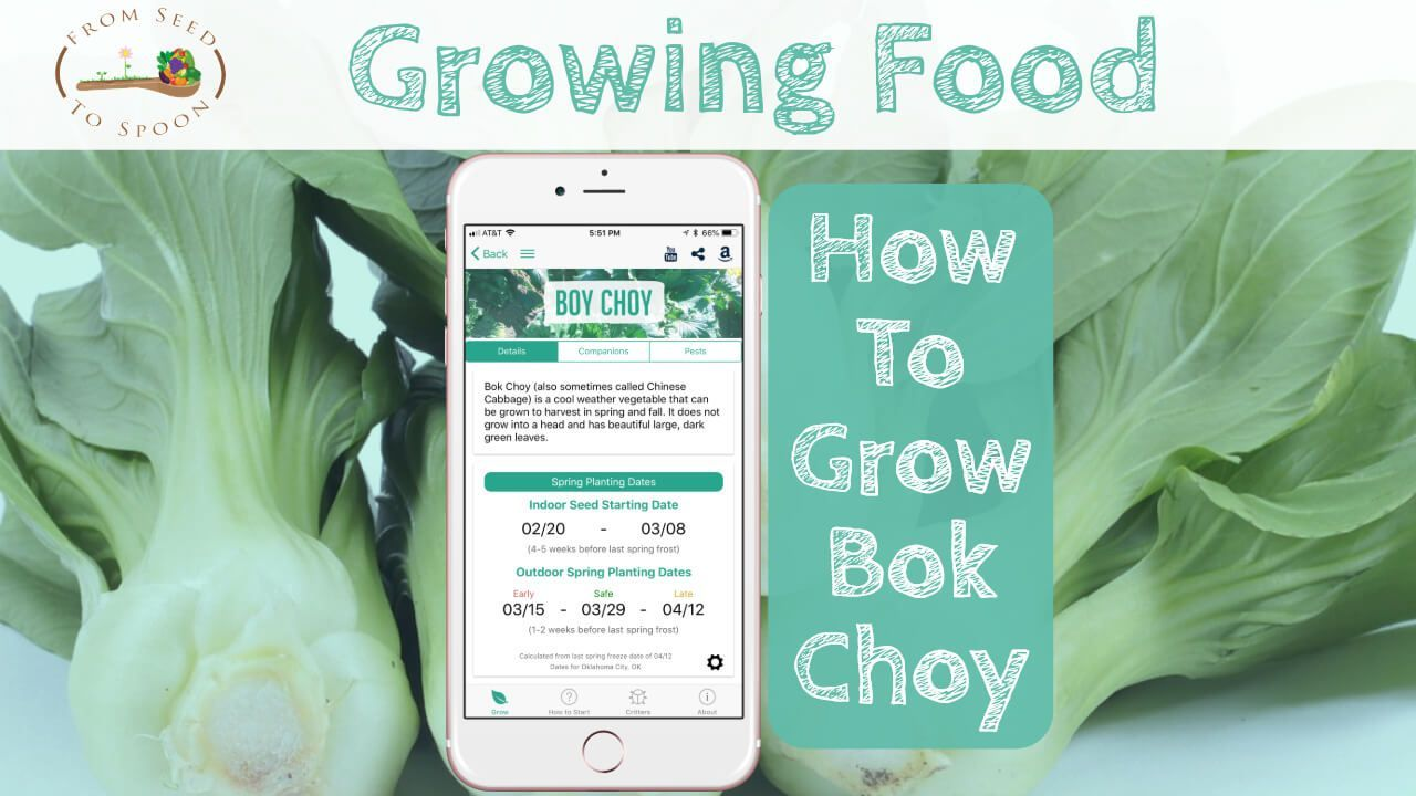 Bok choy how to grow and when to plant in your backyard