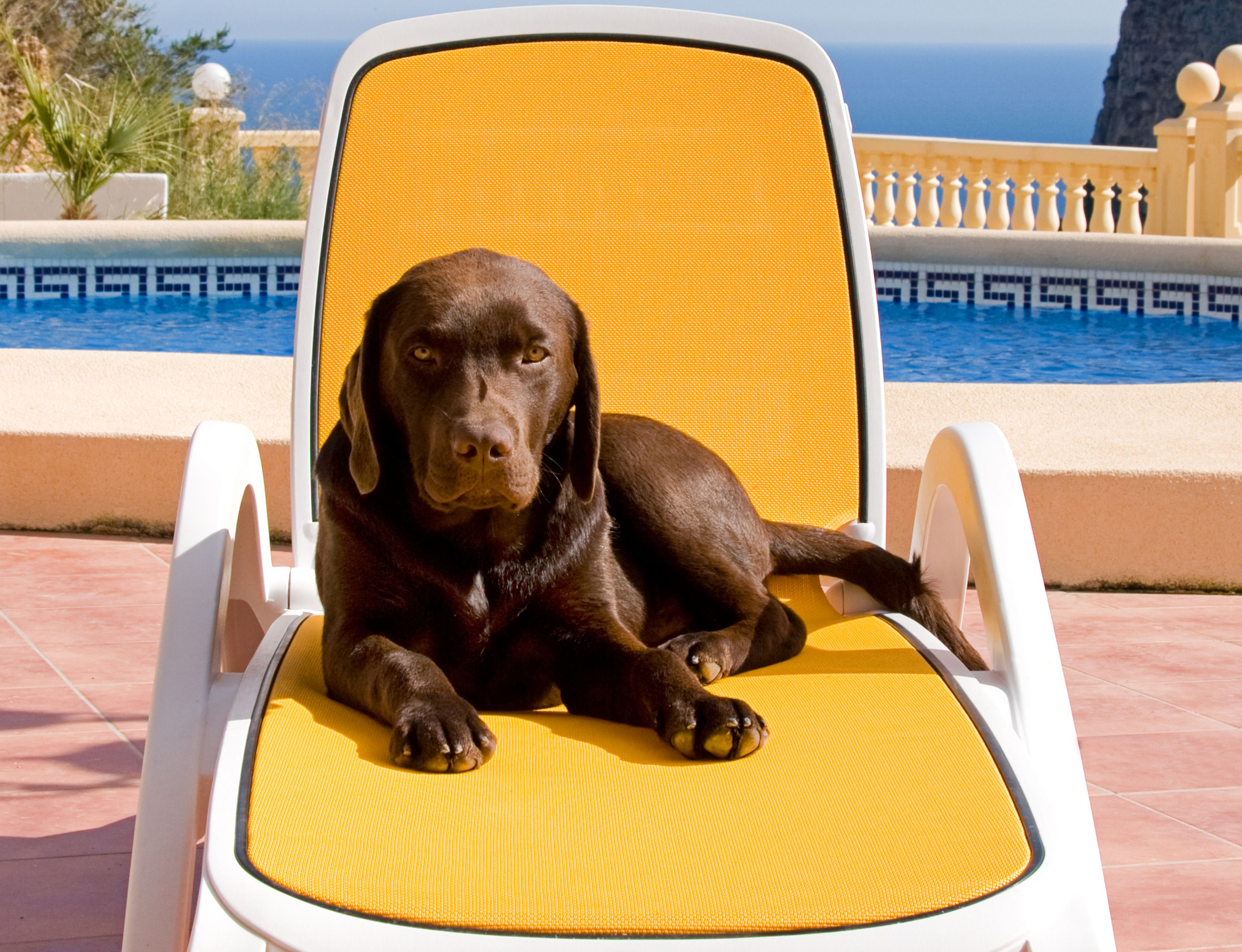 Learn How To Keep Your Pet Safe While Having Fun In The