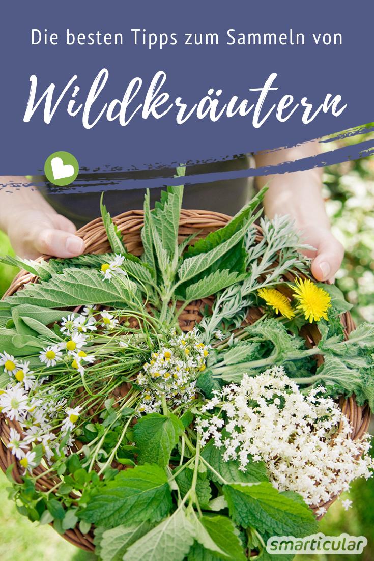 Pin Auf Wildkrauter Wildobst Wildpflanzen Und Baume