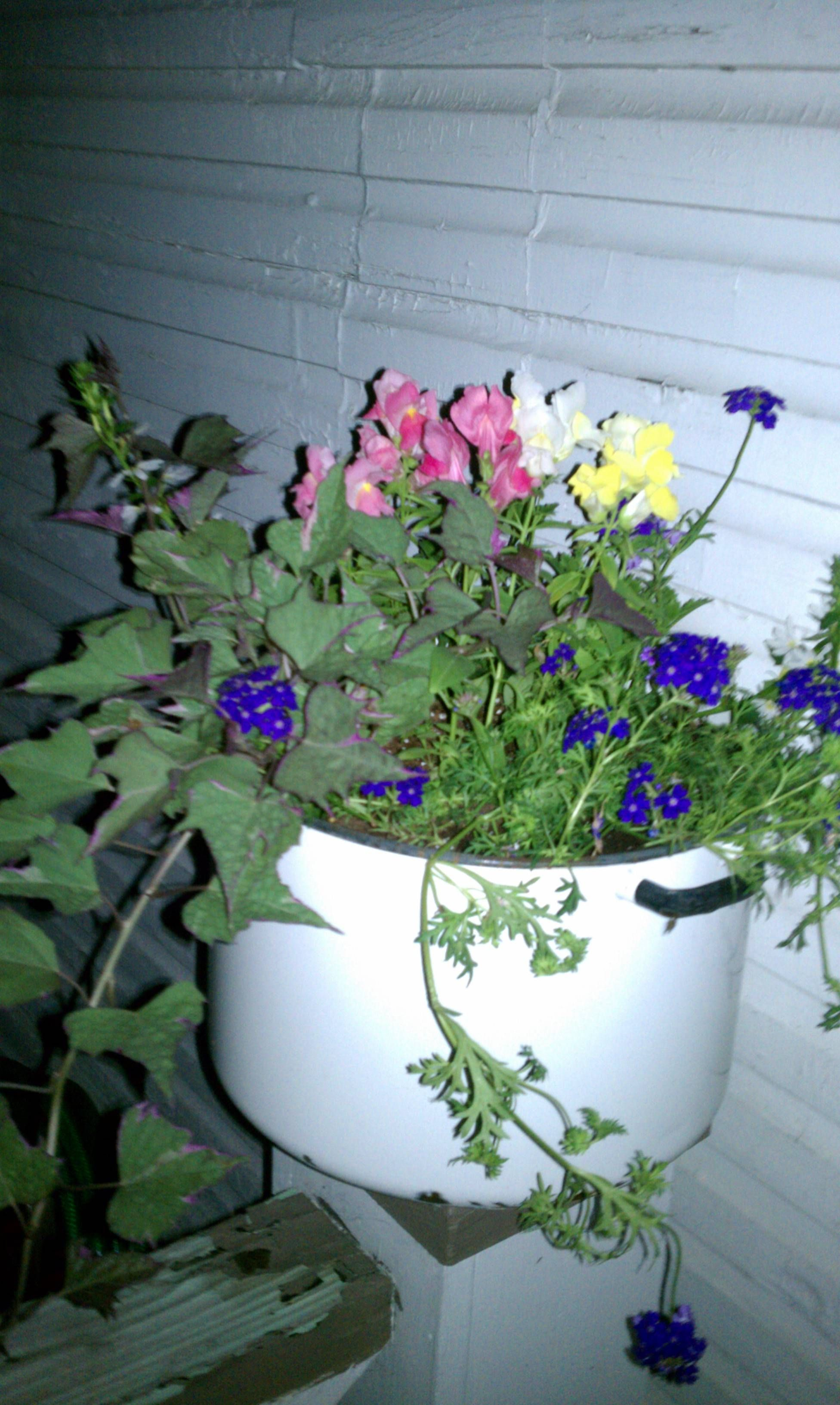 Old Cooking Pot Turned Planter