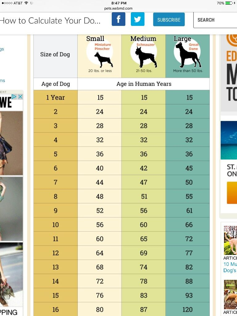 Dog Years Vs Human Years It S Not The 7 We Ve All Heard Our