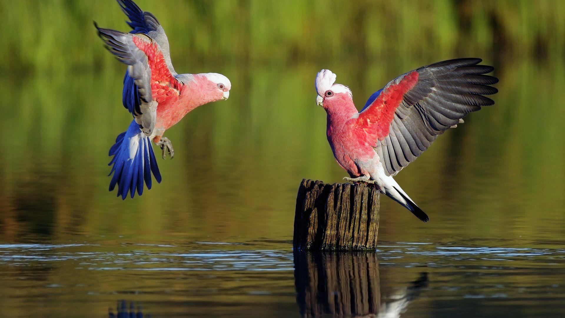 Beautiful Parrots Pictures Wallpaperia Com Beautiful Bird Wallpaper Animals Birds Wallpaper Hd