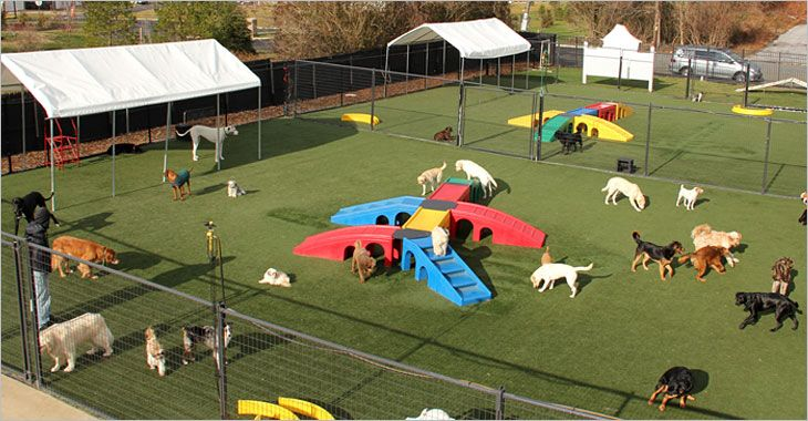 Pin By Jill Wallace On Doggone It Dog Playground Indoor Dog Park Dog Daycare