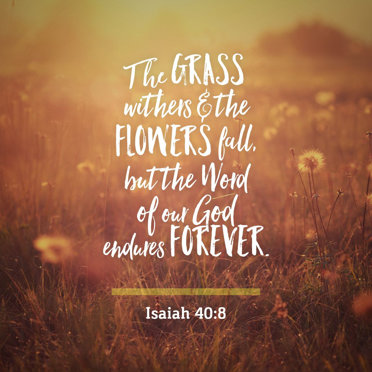 Image Result For Isaiah 40 8