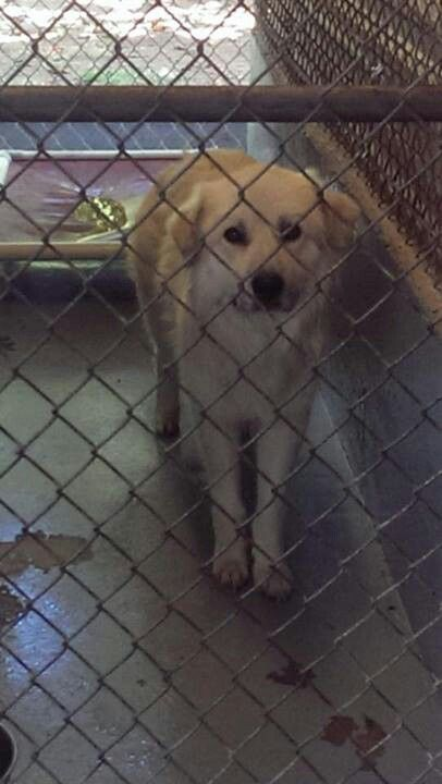 Mega Urgent This Is Cotton She Is Out Of Time At Jones County