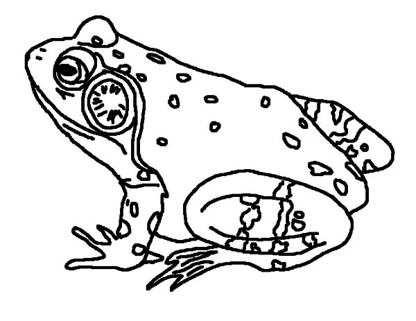Bullfrog Singing Coloring Pages Best Place To Color Di 2020