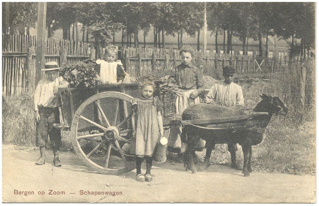 Schapenwagen met ingespannen zwart schaap. Rondom de kar vijf kinderen Goossen Jz., H.W. (uitgever); 1890
