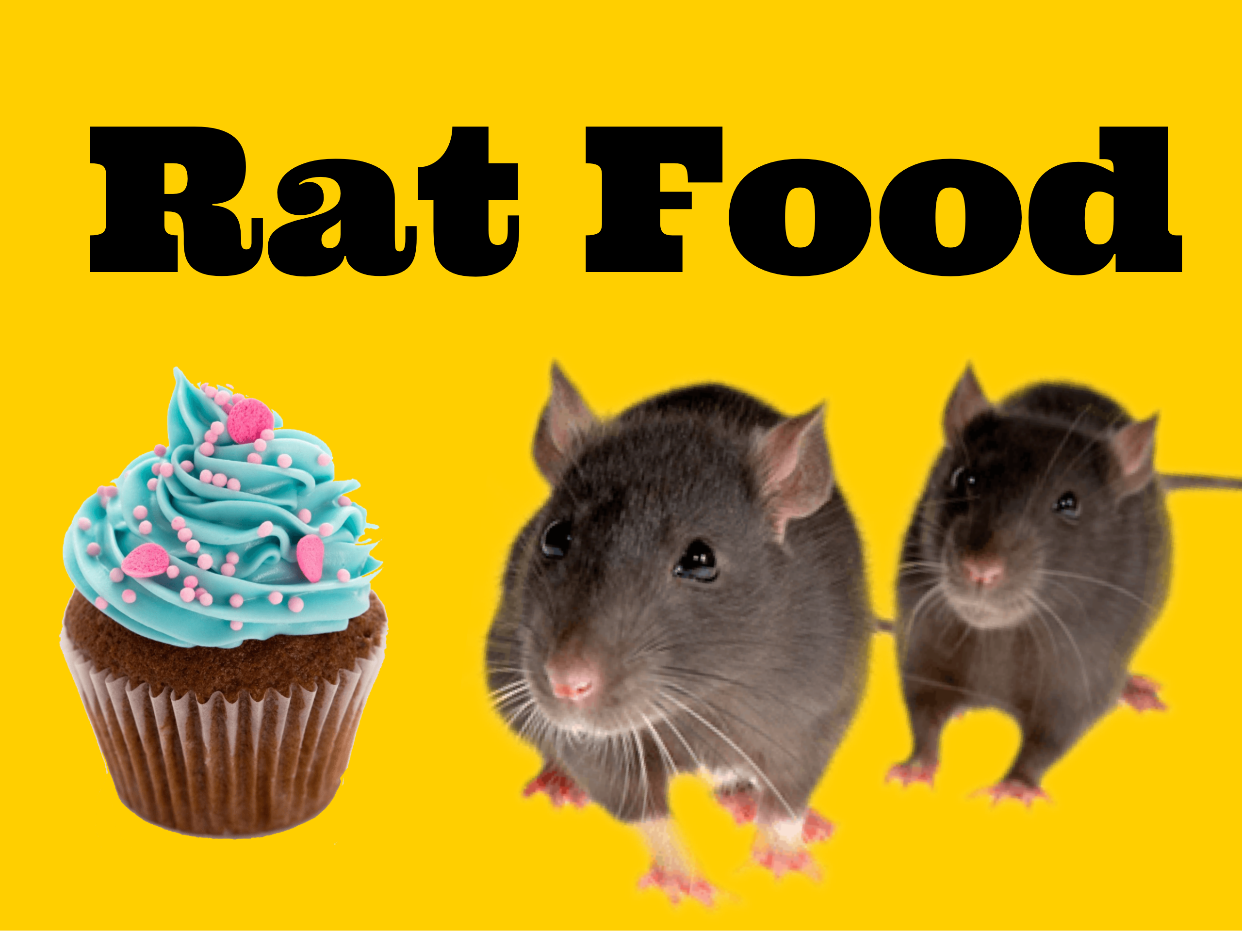What to Feed Your Pet Rat Pet rats, Rat food, Cute rats