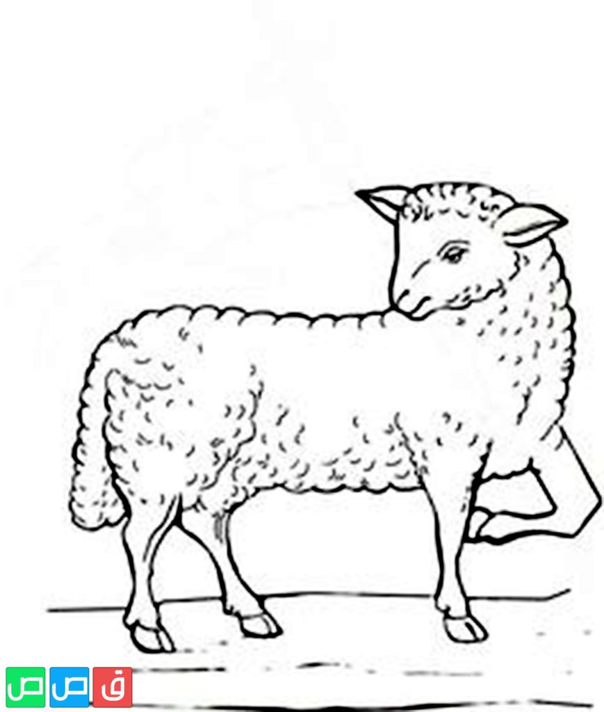 رسم خروف للتلوين Moose Art Art Animals