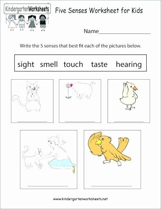 Download 5 Senses Worksheet for Kindergarten Kindergarten Science ...