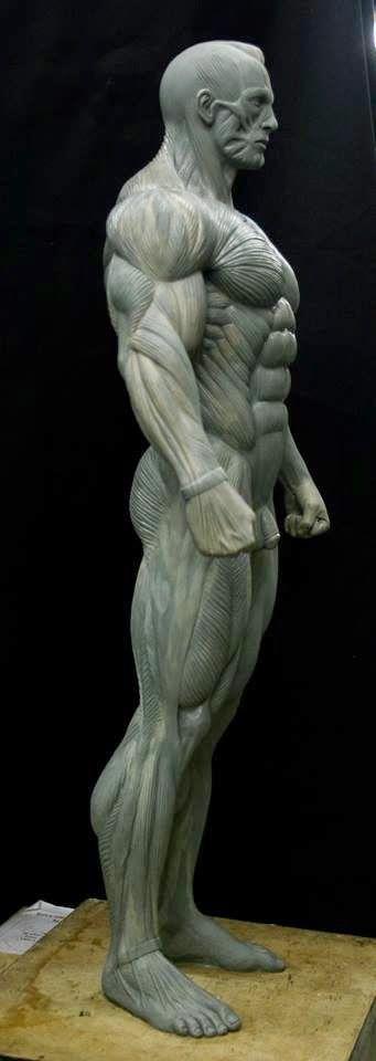 Diego Rudi   Anatomy   Pinterest   Anatomía, Escultura y Anatomía humana