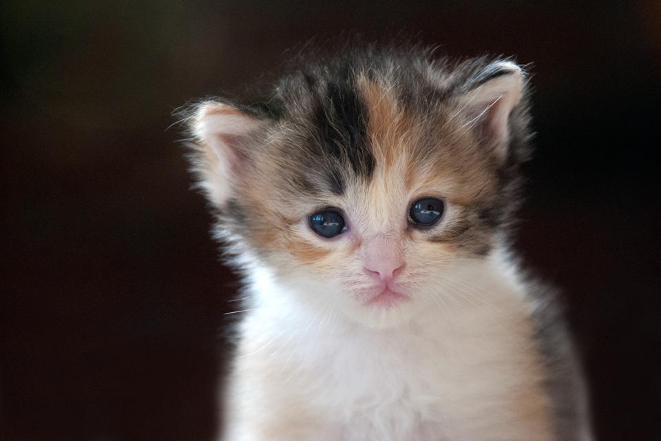 3 Week Old Kitten Google Search Kittens Cutest Cat Photography Pets