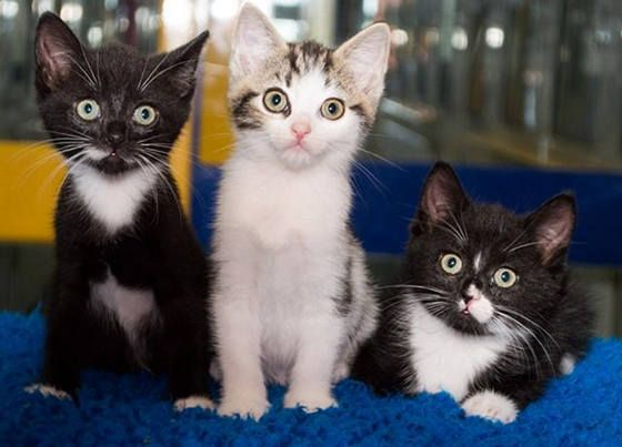 Three Kittens Found Inside Tied Trash Bag They All Made It And Are Doing Wonderful Thanks To The Wonderful Person That Re Happy Animals Cat Love Cute Animals