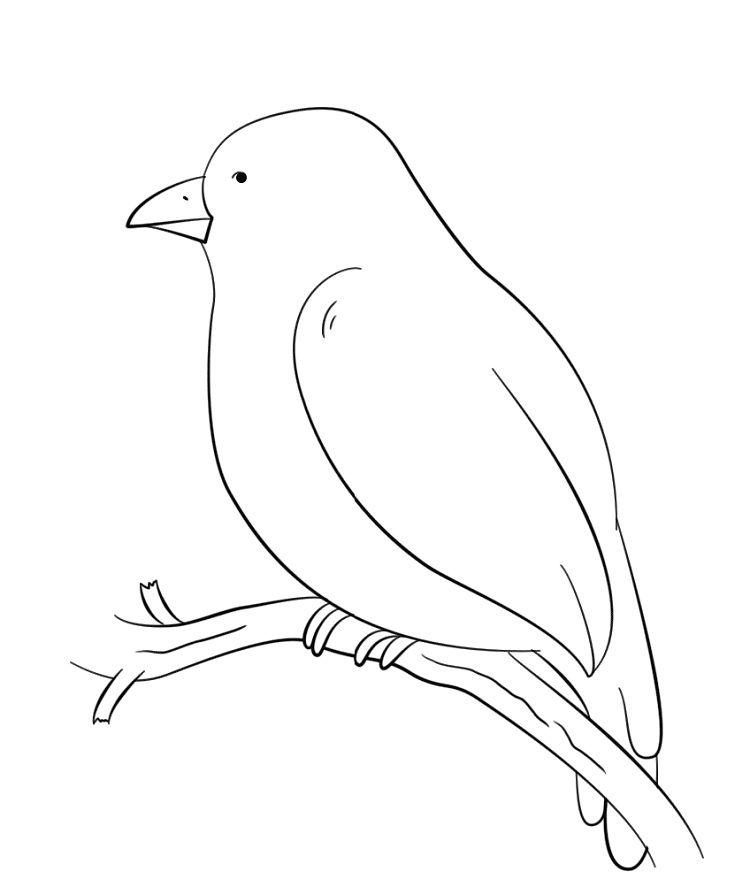 Tody Bird Coloring Page