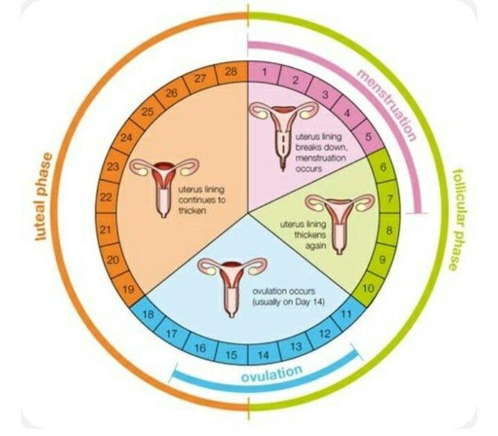 also menstrual cycle chart health benefits pinterest rh