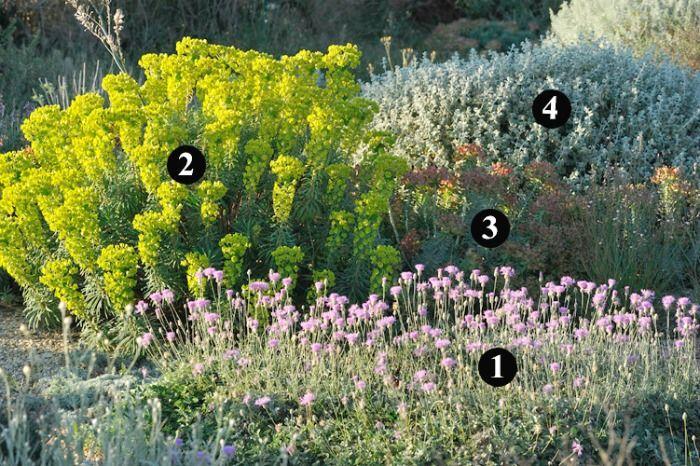 plantas que requieren poca agua y soportan bajas On plantas rusticas para jardin