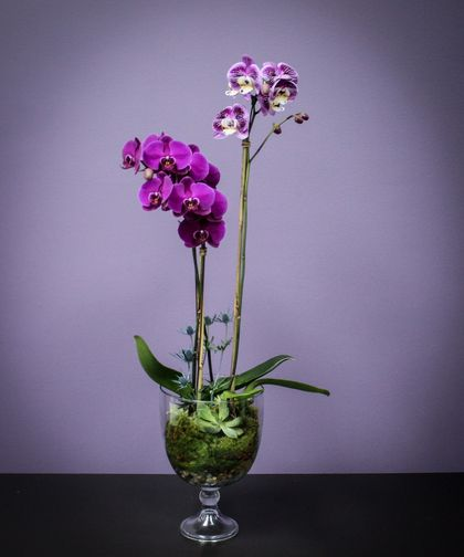 Orchid And Succulents Masterfully Created Like Only The Artisans At Breen S Florist Can This Statement Piece Encompasses The Natural Beauty O Orquideas Ensueno