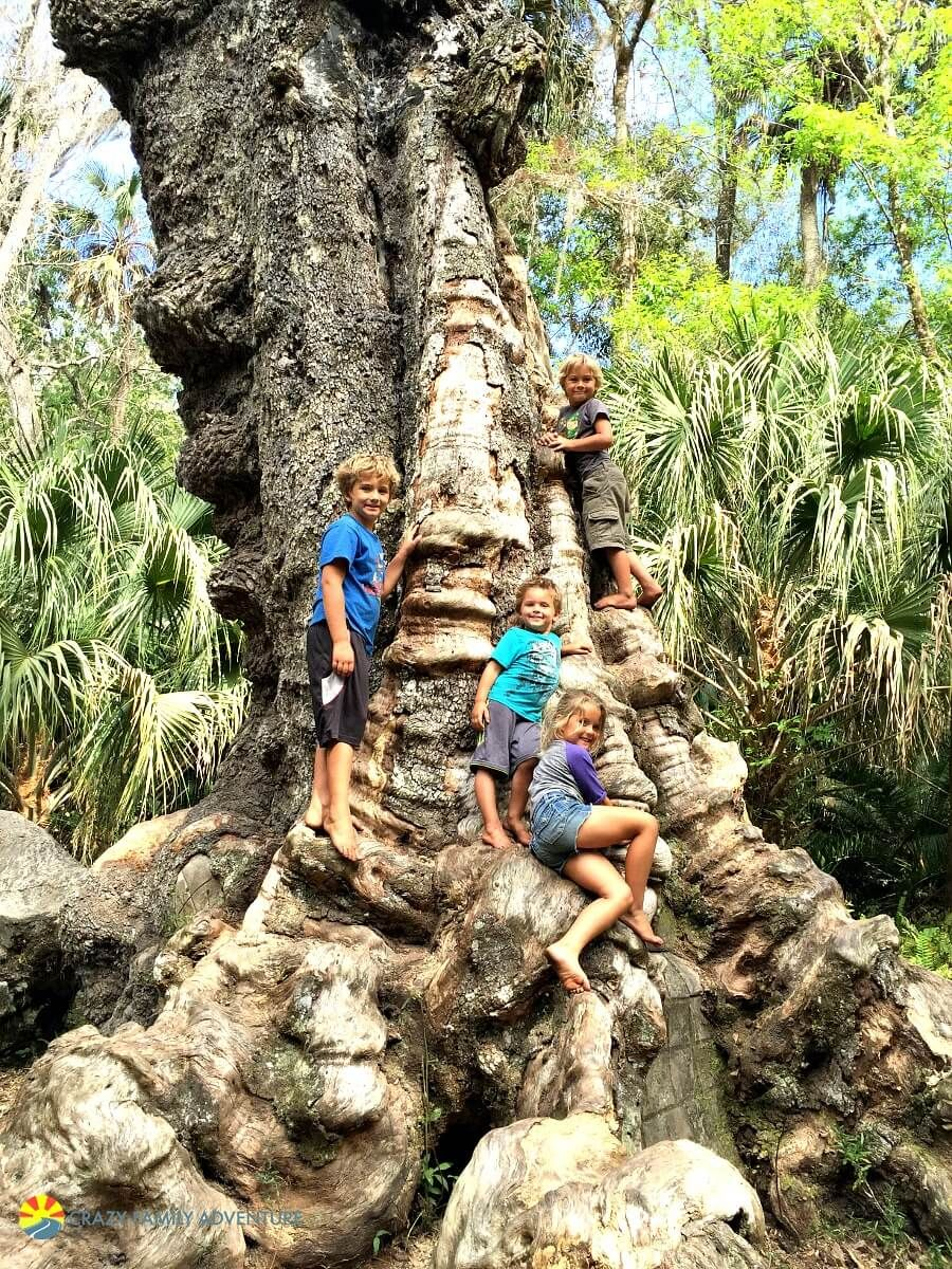 18 Best Places To Visit In Florida With Kids Florida Travel Cool Places To Visit Florida Adventures