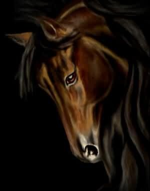 Gallery.ru / Фото #1 - Лошадь - Tempesta   Horses, Animals ...